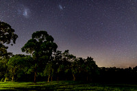 Trees and grass under the night sky with Magellanic Clouds